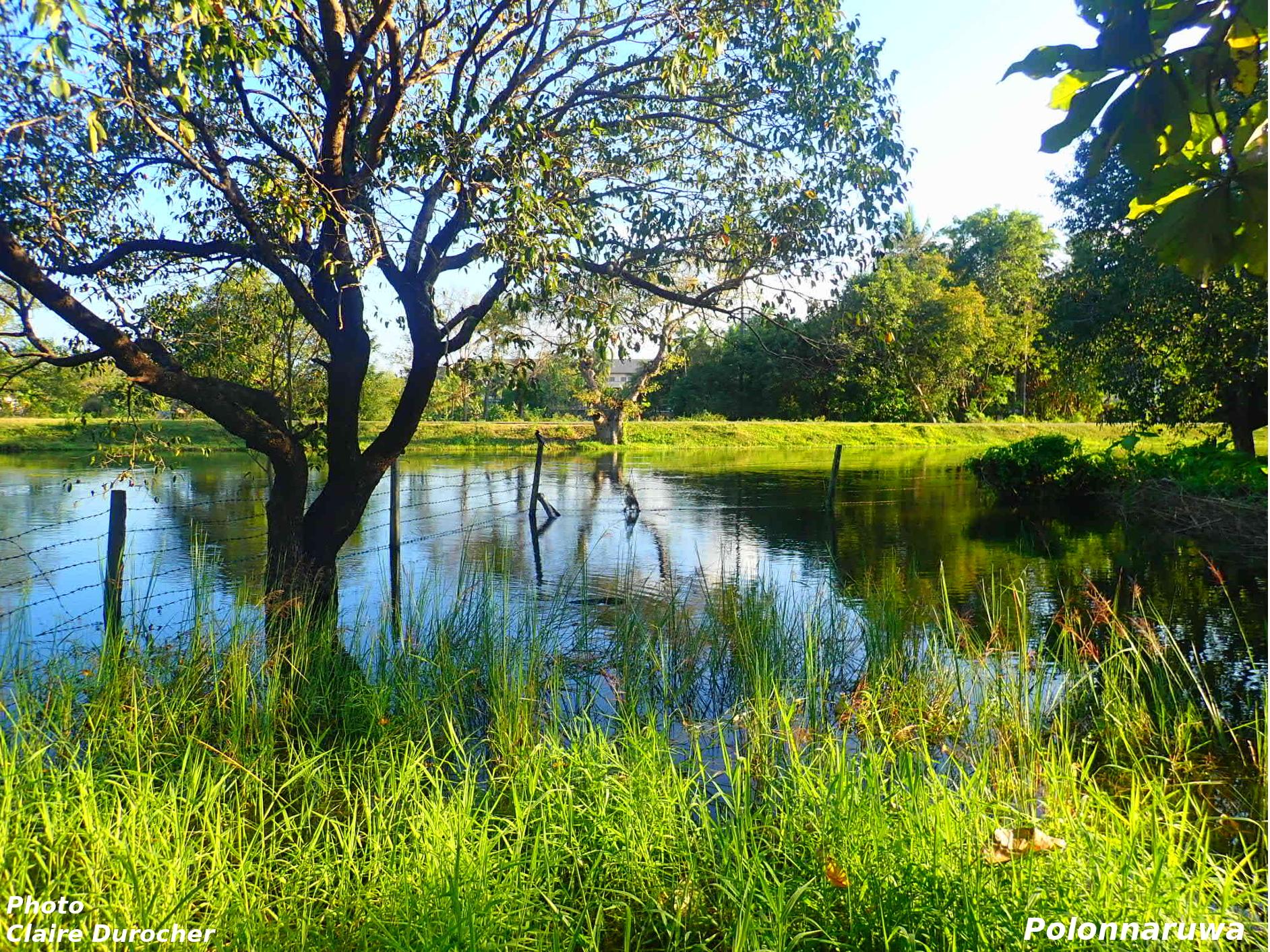 Arbre surplombant un étang
