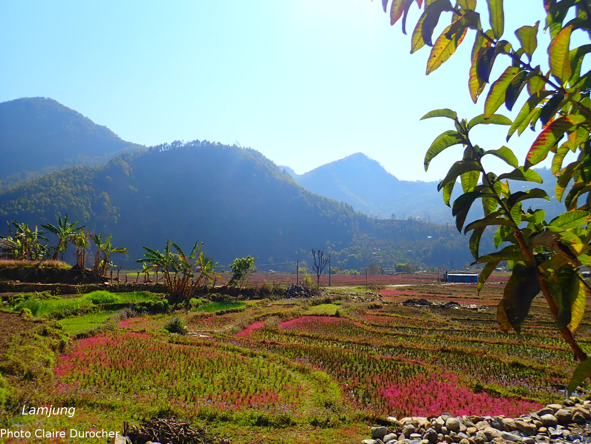Campagne fleurie au pied d'une montagne