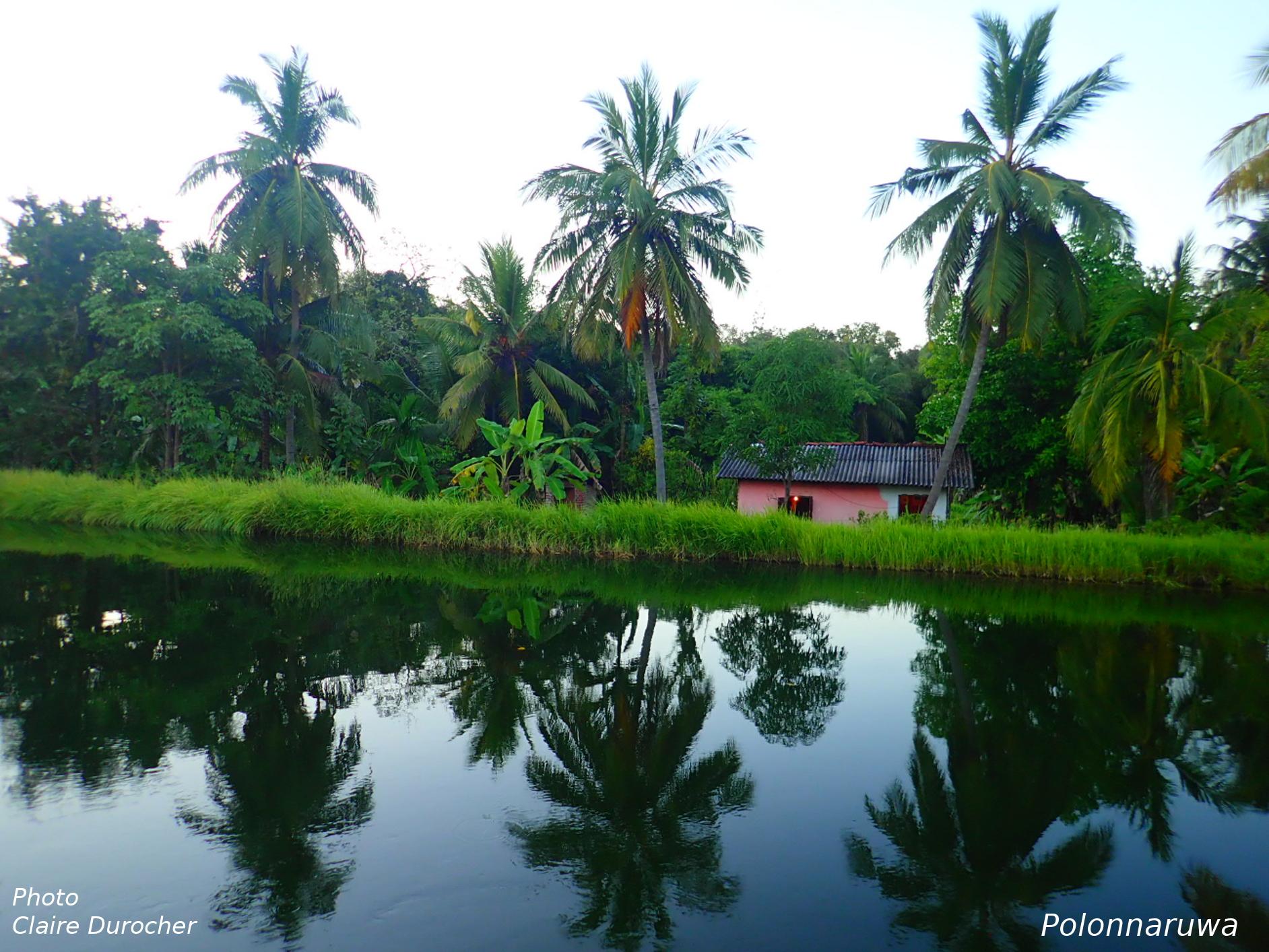 Reflets de palmiers dans l'eau