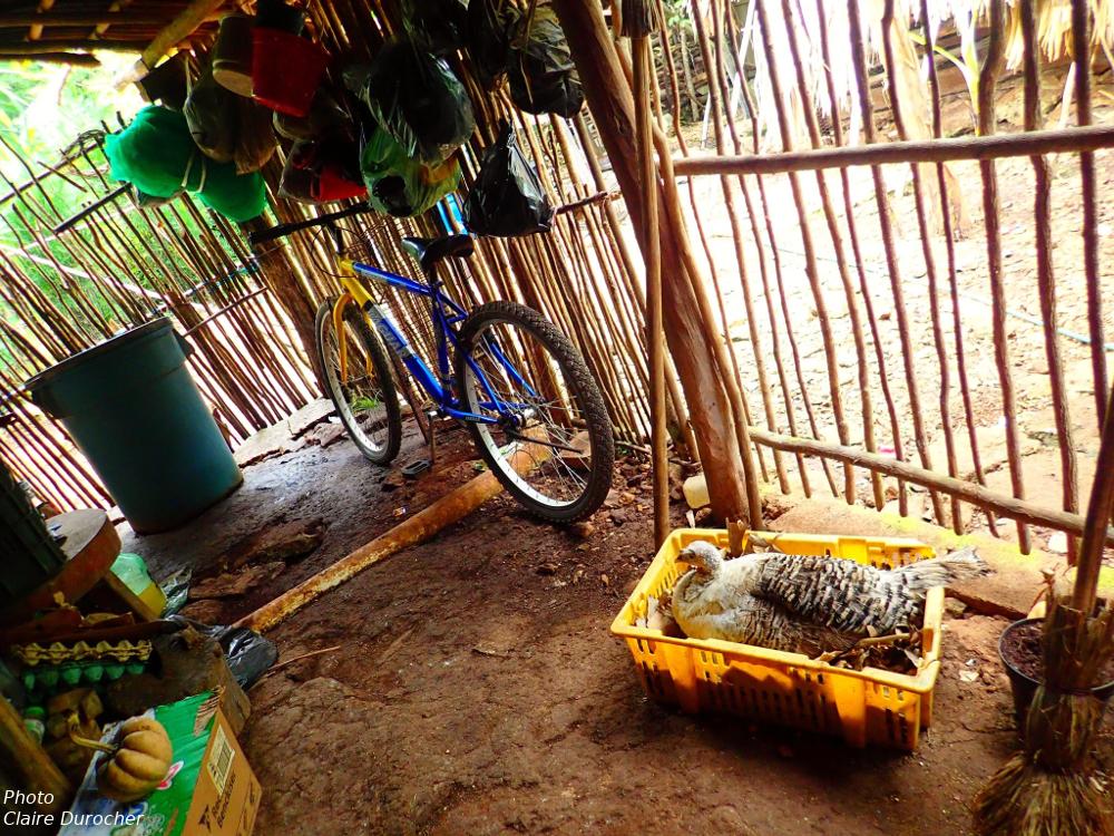 vélo et dindon dans une cour de maison