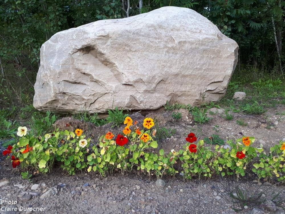 très grosse pierre entourée de fleurs