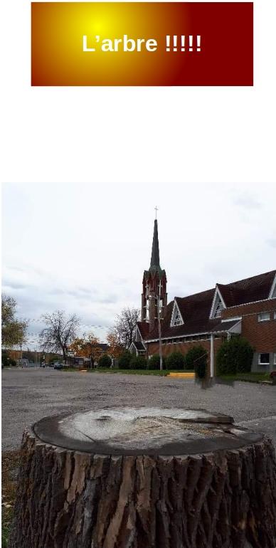 souche près de l'église