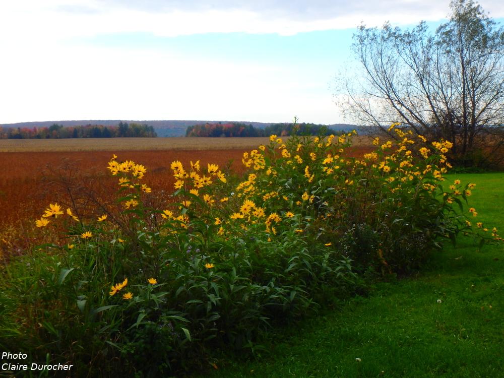 un champ prêt pour les récoltes