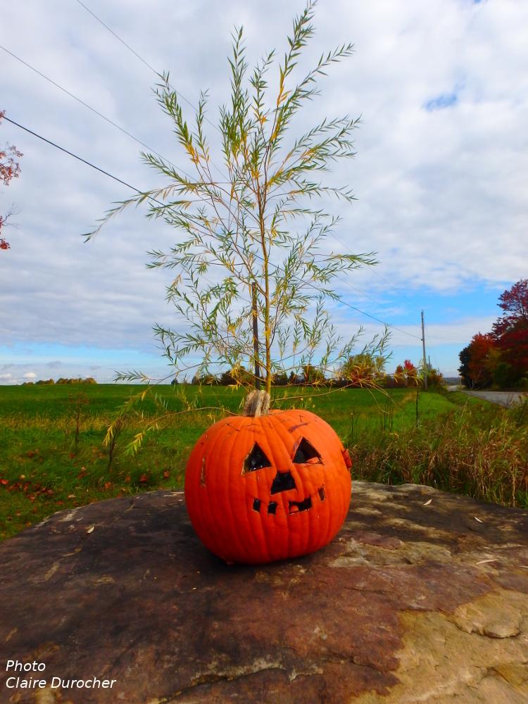 citrouille d'Halloween au bord d'un champ
